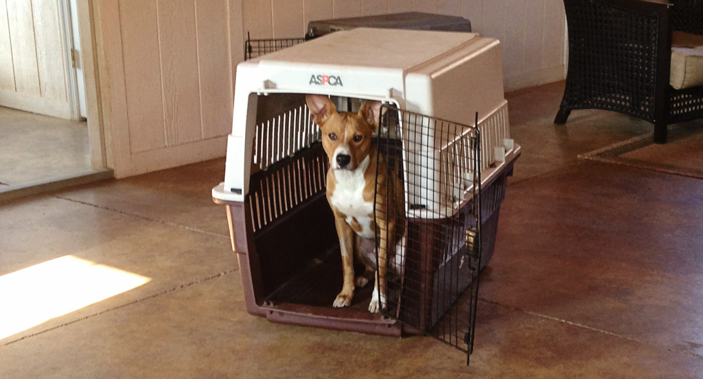 Is Crate Training Cruel?